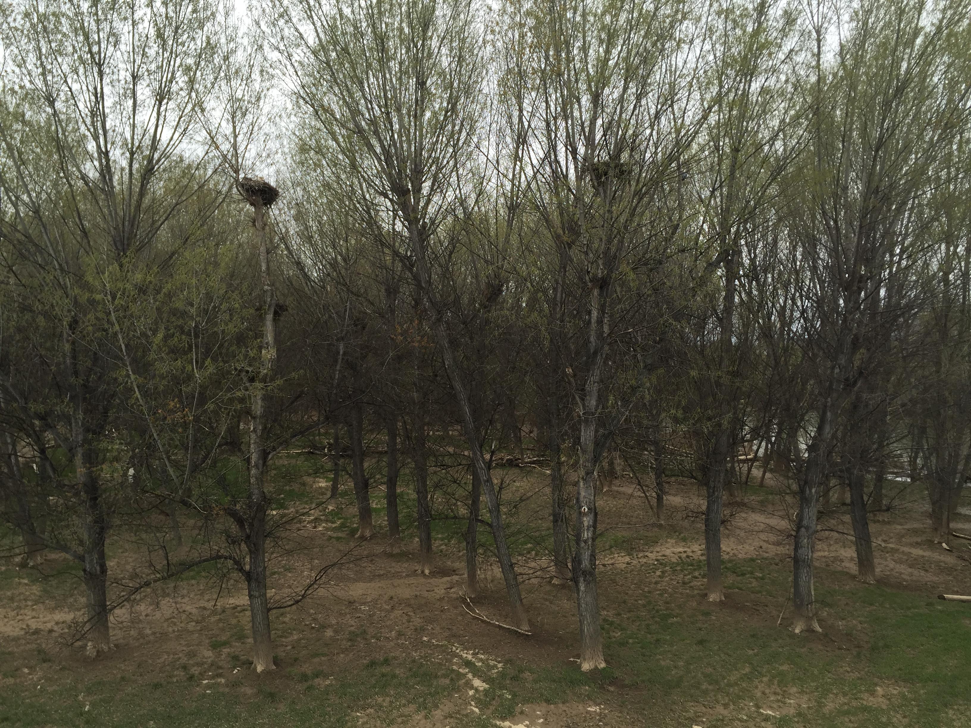 Cigüeñas en Logroño